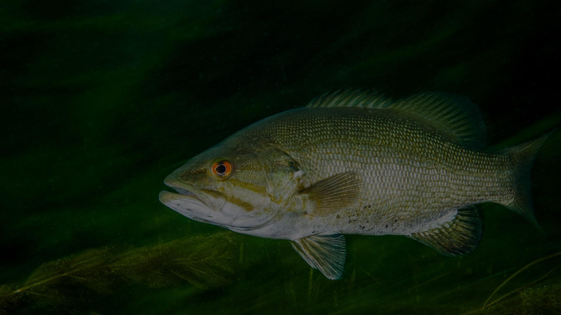 Texas Lake & Pond Management, Fish Stocking - Southwest